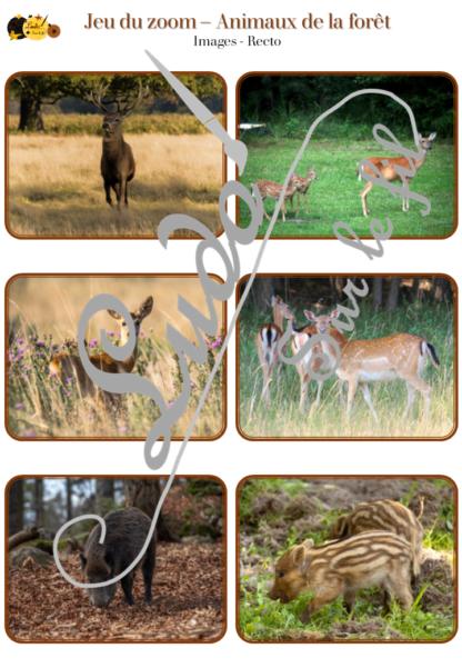 Jeu du zoom - animaux de la forêt - cartes à associer aux détails - à télécharger et à imprimer - atelier maternelle automne - lslf