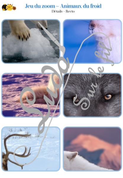 Jeu du zoom - Animaux du froid - Hiver - Animaux banquise, Antarctique, Arctique, Pôles Nord et Sud, grand froid, montagne - cartes classifiées à associer aux détails - Etiquettes noms pour alternative ludique aux cartes de nomenclature - à télécharger et à imprimer - atelier maternelle - vocabulaire et connaissances - autocorrectif - lecture mots - lslf