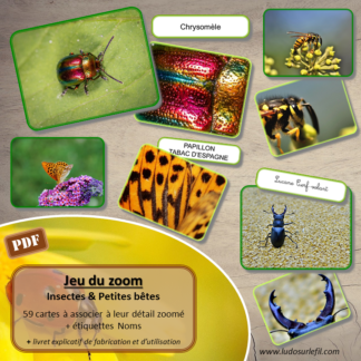 Jeu du zoom - Insectes et autres petites bêtes du jardin - Printemps - cartes classifiées à associer aux détails - Etiquettes noms pour alternative ludique aux cartes de nomenclature - à télécharger et à imprimer - atelier maternelle - vocabulaire et connaissances - autocorrectif - lecture mots - lslf