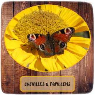 Chenilles & Papillons